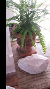 Tiny Altars-IntuitiveBody.com