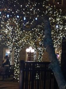 newport holiday lights