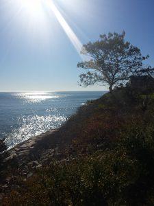 tree sea sky